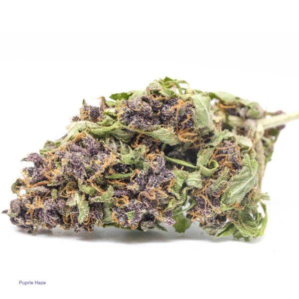 buy purple haze